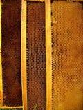 Células de las abejas de la miel Imagen de archivo libre de regalías