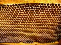 Células de las abejas de la miel Fotografía de archivo libre de regalías