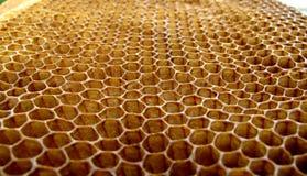 Células de las abejas de la miel Fotos de archivo