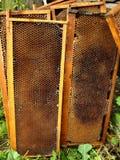 Células de las abejas de la miel Imagen de archivo