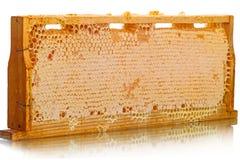 Células de madera de la colmena con la miel Fotos de archivo