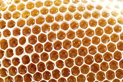 Células del panal de la cera de la abeja de la miel con la miel dulce Foto de archivo