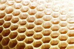 Células del panal de la cera de la abeja de la miel con la miel dulce Imagen de archivo libre de regalías