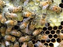 Células del polen y del néctar imagenes de archivo