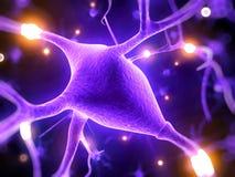 Células nerviosas activas Fotografía de archivo libre de regalías