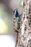Céntrese un camaleón en árbol. Fotos de archivo