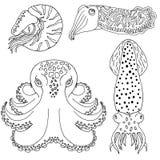 Céphalopodes tirés par la main pour livre de coloriage illustration de vecteur