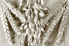 Céréale Photos libres de droits