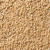Céréale Image stock