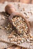 Céréales (blé, seigle, orge, avoine et millet) Photographie stock libre de droits