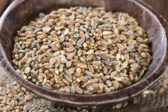 Céréales (blé, seigle, orge, avoine et millet) Photo libre de droits