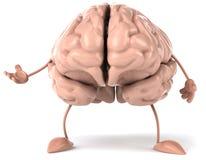 Cérebro Fotografia de Stock Royalty Free