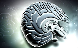 Cérebro Fotografia de Stock