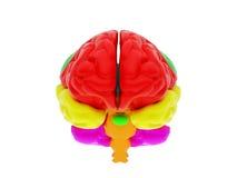 cérebro 3d humano Imagens de Stock Royalty Free