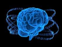 Cérebro binário Fotografia de Stock