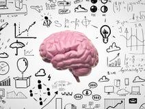 Cérebro 3d Fotografia de Stock Royalty Free