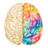 Cérebro da aquarela ilustração royalty free