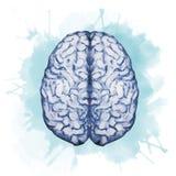 Cérebro da aquarela ilustração stock