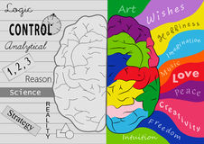 Cérebro da faculdade criadora Imagens de Stock