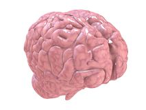 Cérebro de Humain Foto de Stock