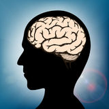 Cérebro dentro da cabeça humana Imagens de Stock
