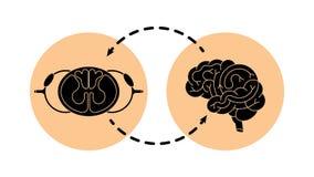 Cérebro do Cns e cabo do spnal Fotos de Stock