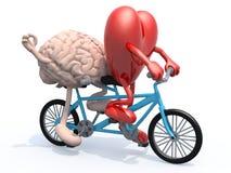 Cérebro e coração que montam a bicicleta em tandem Imagens de Stock Royalty Free