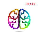 Cérebro esquerdo e backgr coloridos criativos do conceito da ideia do cérebro direito Imagens de Stock