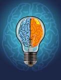 Cérebro esquerdo e direito Imagens de Stock