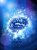 Cérebro & fórmulas químicas Imagens de Stock Royalty Free