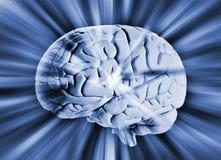 Cérebro humano com as raias da energia foto de stock royalty free