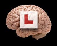 Cérebro humano com sinal do principiantes Foto de Stock