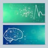Cérebro humano e pulso Imagem de Stock