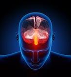 Cérebro humano ilustrado com milhões de nervos pequenos ilustração stock