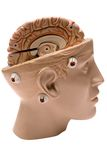 Cérebro humano (vista lateral) imagem de stock royalty free