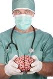 Cérebro masculino da terra arrendada do cirurgião Foto de Stock Royalty Free
