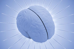 Cérebro modelo imagens de stock