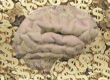Cérebro no fundo de símbolos do dólar Imagens de Stock Royalty Free