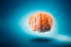 Cérebro que flutua em um fundo azul/foco seletivo fotografia de stock