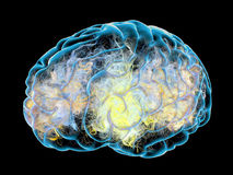 Cérebro, rendição das sinapses 3d Fotos de Stock Royalty Free