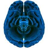 Cérebro rendido em 3D ilustração stock