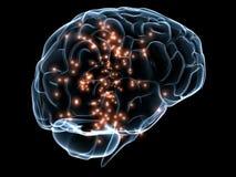 Cérebro transparente humano ilustração royalty free