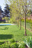 Césped bien arreglado con la piscina en patio trasero Fotos de archivo