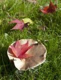 Césped con la seta y las hojas rojas Imágenes de archivo libres de regalías