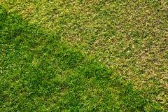 Césped de la hierba Foto de archivo libre de regalías