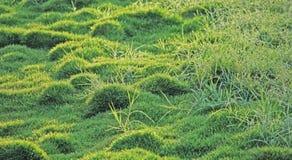Césped de la hierba por una mañana del invierno Fotografía de archivo libre de regalías
