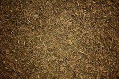Césped de la hierba seca Imágenes de archivo libres de regalías