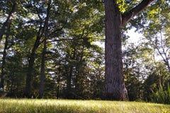Césped de la hierba verde imagen de archivo libre de regalías