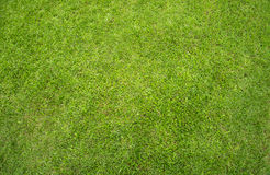 Césped de la hierba verde Imagenes de archivo