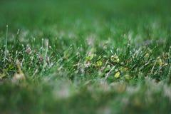 Césped del inglés de la hierba verde fotos de archivo